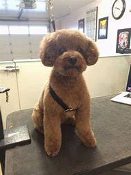 pictures of poodle haircuts best 25 ideas about poodle haircuts find what you ll love