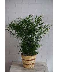 Plant Delivery Plants Delivery In Raleigh Nc Fallon U0027s Flowers