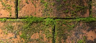 Moss Cleaner For Patios Moss Removal Tips Doityourself Com