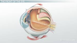 parts of the eye and their functions video u0026 lesson transcript