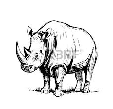800 rhino outline stock vector illustration and royalty free rhino