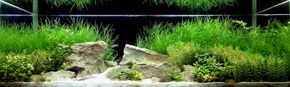 planted tank contest aquarium design aquascape awards