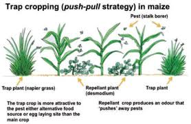 Methods Of Controlling Plant Diseases - pest and disease management in organic agriculture teca