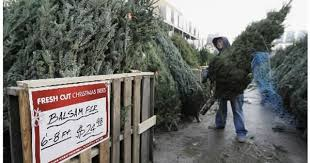 tis the season for christmas trees csmonitor com