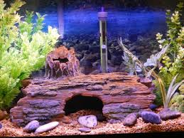 How To Clean Fish Tank Decorations Live Vs Artificial Aquarium Plants Which Is Better Pethelpful