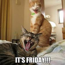 Happy Cat Meme - happy friday meme that will make best weekend betameme