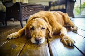 repulsif chien canapé comment faire un répulsif naturel contre les chiens astuces de