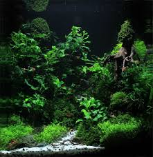 50 stunning aquascape design ideas meowlogy