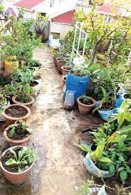 the vegetables available in the market use a lot of pesticides says 52 year old ramakrishnan who has a small garden in his backyard