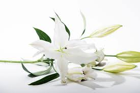 nyc cremation nyc funeral and cremation service inc