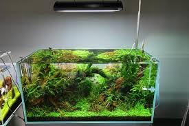 best led light for planted tank ada solar rgb led lighting system 130w aqua forest aquarium