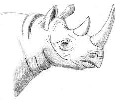 drawn rhino sketch pencil and in color drawn rhino sketch
