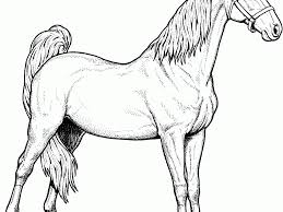 download printable coloring pages horses ziho coloring