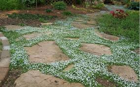 Shop Pavers U0026 Stepping Stones The Best Plants To Grow Between Stepping Stones U0026 Pavers From