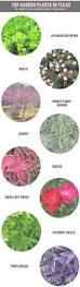 Different Types Of Garden Plants Best 25 Texas Plants Ideas On Pinterest Texas Gardening Texas