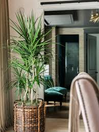 Indoor Trees For The Home by Hgtv Dream Home 2017 Living Room Pictures Hgtv Dream Home 2017