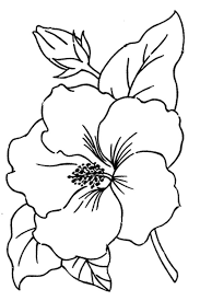 coloring pages simple flowers to draw hibiscus coloring pages