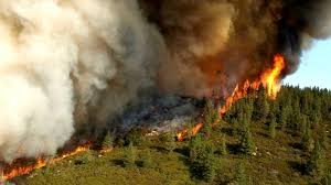 California Forest images California 39 s forests have become climate polluters climate central jpg