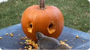 creative squirrel skillfully uses his teeth to carve a face into a