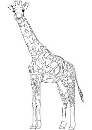 giraffe coloring pages printable drawing kids clip art library