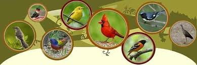 Florida Backyard Birds - duval county bird list jacksonville florida