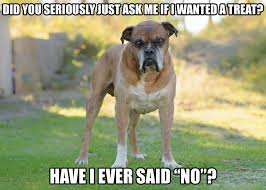 boxer dog meme dog memes part 5 the good the sad and the funny dogtime