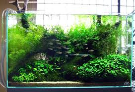 Aquascape Environmental Aquarium Design Group An Aquascape Of Highlight And Shadow