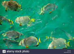 tropical fish off green island on the great barrier reef near