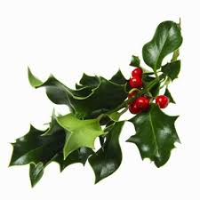 where to buy mistletoe handmade craft items all about mistletoe
