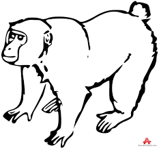 chimpanzee clipart outline pencil and in color chimpanzee