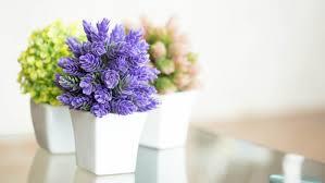 indoor flowering plants no sunlight