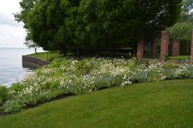 favorite perennials the daisies dirt simple
