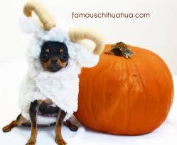 Chihuahua Halloween Costume 2011 Halloween Costume Contest Winner Chihuahua Frog
