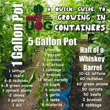 gardening tips best 25 container gardening ideas on pinterest growing