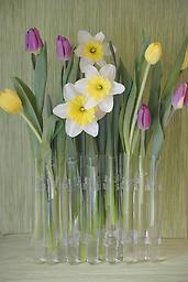 Test Tube Flower Vases Test Tube Vase