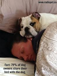 Dog Owner Meme - sharing a bed with a dog restate co