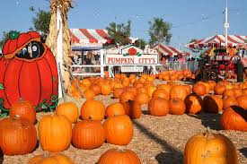 Local Pumpkin Patches The Best Pumpkin Patches In Orange County Orange County On The Cheap