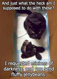 Evil Cat Meme - best 25 evil cats ideas on pinterest evil pictures funny