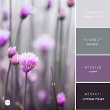 canva color palette ideas 90 best canva images on pinterest color palettes color