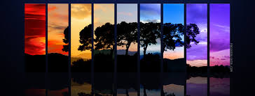 tree spectrum cover fbcoverlover