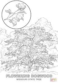missouri state tree coloring page free printable coloring pages