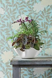 in door plant put in pot vide indoor container garden ideas southern living