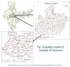 assessment of genetic variations among medicinal plant cassia tora