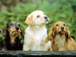 cute dog wallpapers cute dog family high definition wallpapers hd wallpapers 1080p