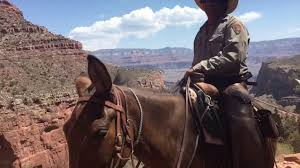 Arizona travel to work images Summer work and travel 2016 grand canyon arizona jpg