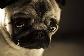 Sad Animal Memes - sad animal face