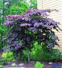 Small Shrubs For Front Yard - small trees for front yard best 25 front yard tree ideas ideas on