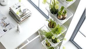 plantes bureau plante bureau plantes vertes bureau bureau plante verte isawaya info