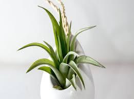 Indoor Plant For Office Desk Dreadful Images Pottery Planters Wondrous Office Desk Plants Cute
