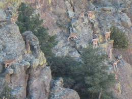Florida mountains images Ibex in the florida mountains near deming 02 08 jpg
